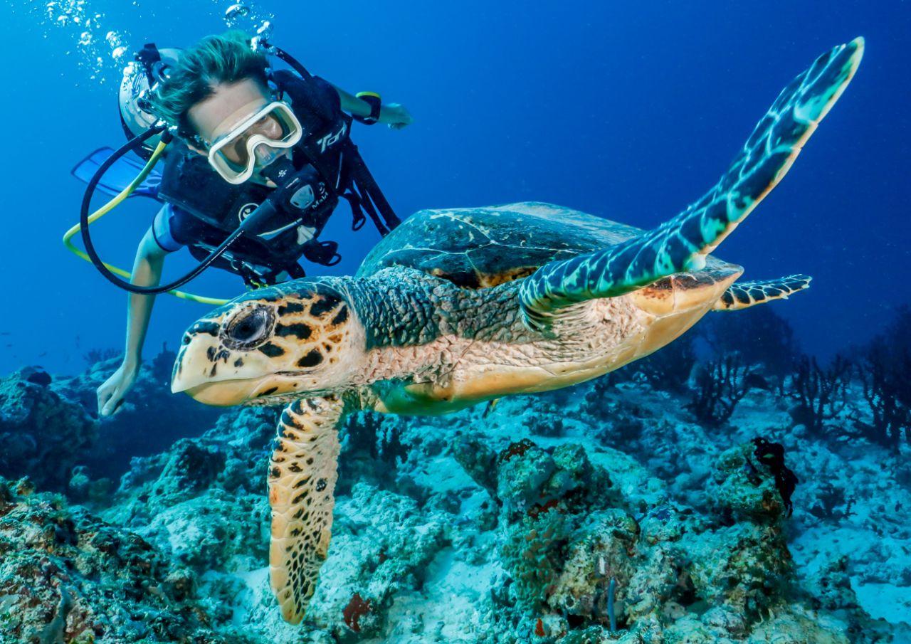 Rescue-Turtles-Maldives